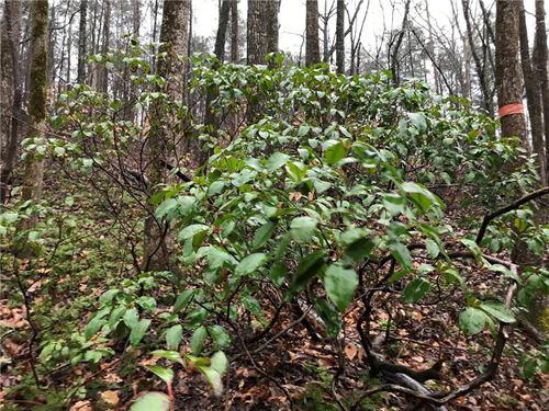 5.97 Acre Creek Front Lot : Talking Rock : Pickens County : Georgia