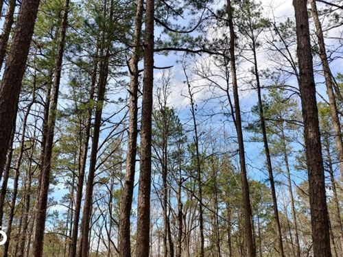 5 Acres Close to Highway 10 And Wye : Bigelow : Pulaski County : Arkansas