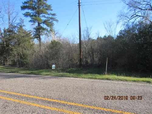 Rural Timber Land In East Texas : Longview : Gregg County : Texas
