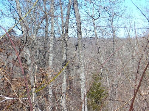 Timberland Property Mammoth Spring : Mammoth Spring : Fulton County : Arkansas