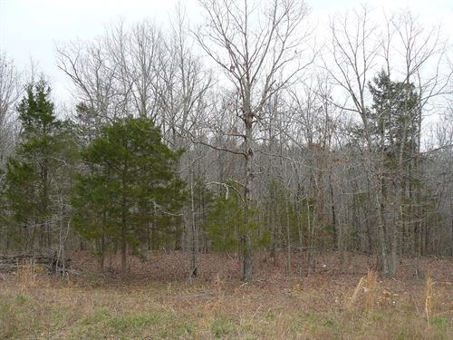 Acreage Creek Mountain View : Mountain View : Stone County : Arkansas