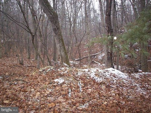 Albino Drive Springfield Wv : Springfield : Hampshire County : West Virginia