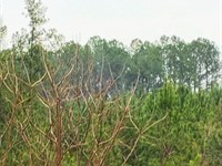 Moss Road, 14.81 Acres : Fairmount : Pickens County : Georgia