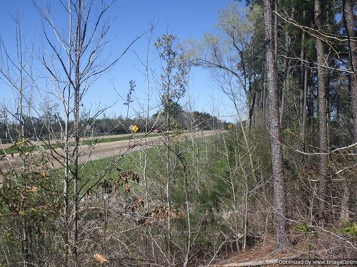 Wooded Lot : Florence : Rankin County : Mississippi