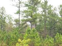 Moss Road, Lot 24 : Fairmount : Pickens County : Georgia