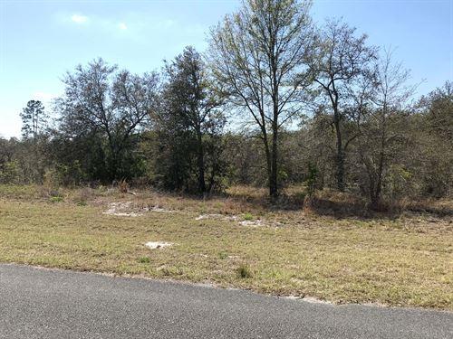5.05 Acres Deer Meadows : Live Oak : Suwannee County : Florida