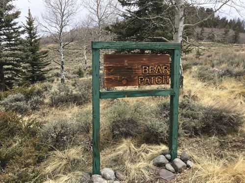 Buckskin Trail : Gunnison : Colorado