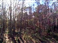 Flagler Estates, Camp Or Invest : Bunnell : Flagler County : Florida