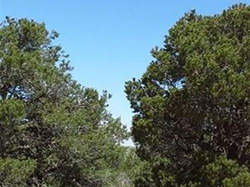 Wild Horse Mesa, Costilla Cnty, Co : Los Fuertes : Costilla County : Colorado