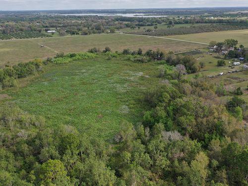 Reynolds Road Hunting Tract : Bartow : Polk County : Florida