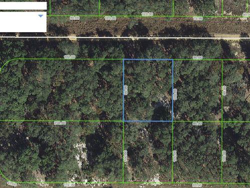 Great Lot For Home, Avon Park, Fl : Avon Park : Highlands County : Florida