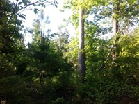 Deer Haven Estate : Carlton : Madison County : Georgia