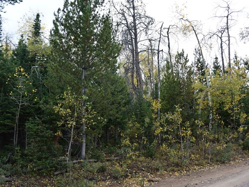 Pines At Elk Ridge Estates, Lot 7 : Dubois : Fremont County : Wyoming