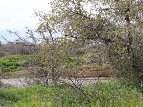 Creekside Lot Spring Valley, AZ : Spring Valley : Yavapai County : Arizona