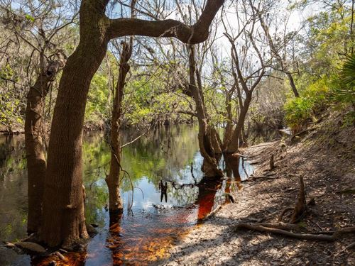 Great Camping Get-Away Type Parcel : White Springs : Hamilton County : Florida