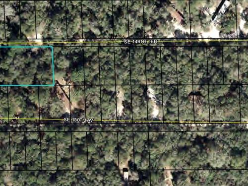 Large Lot, Dixie County, Fl : Dixie County : Dixie County : Florida