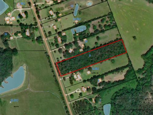Wooded Lot On County Rd, 37 : Burkville : Lowndes County : Alabama