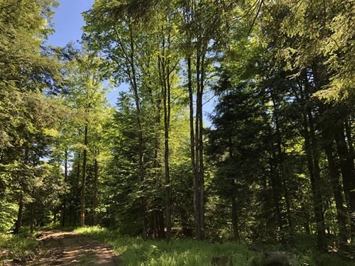 Carleton Woods : Camden : Oneida County : New York