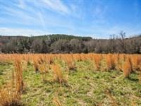 18.24 Acre Mini Farm : Woodruff : Spartanburg County : South Carolina