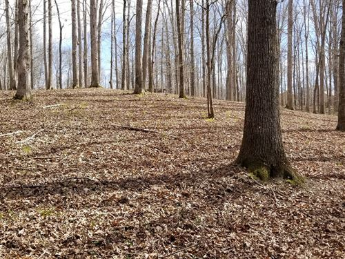 2 Acres Close to TN River Perry : Lobelville : Perry County : Tennessee