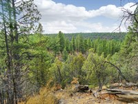 20 Acres Near National Forest : Grants : Cibola County : New Mexico