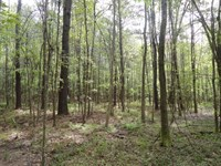 Land 4.65 Acres Bogue Chitto : Bogue Chitto : Lincoln County : Mississippi
