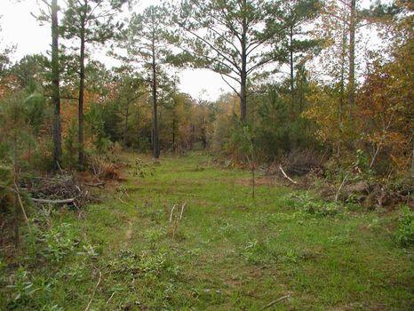 7.47 Acre Home Site : Pine Level : Montgomery County : Alabama