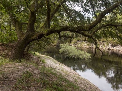 Wow, 13.88 Acres Very Diverse : Jasper : Hamilton County : Florida