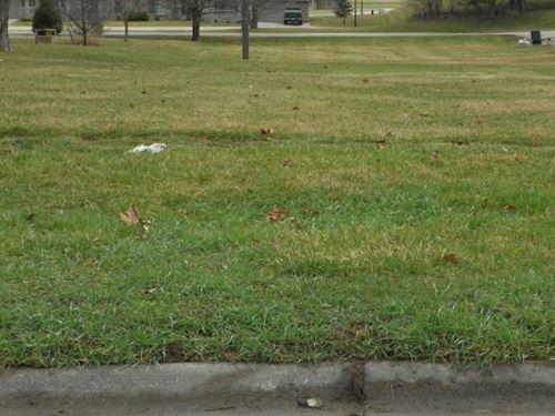 .20 Acre Bare Lot in Sigourney : Sigourney : Keokuk County : Iowa