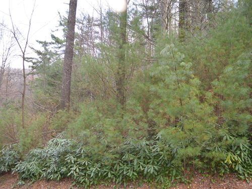 Wooded Mountain Building Lot : Sparta : Alleghany County : North Carolina