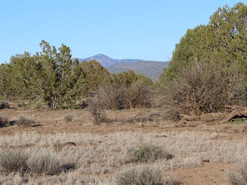 Cabin Building Land Near Ashfork : Ash Fork : Yavapai County : Arizona
