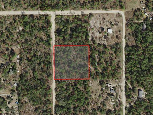 Secluded Mini-Farm : Dunnellon : Citrus County : Florida