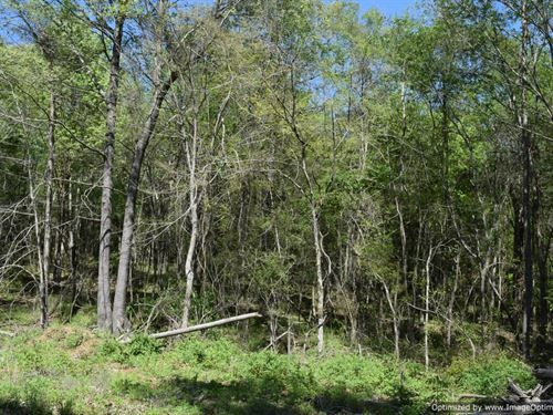 Wooded Lot : Pickens : Yazoo County : Mississippi