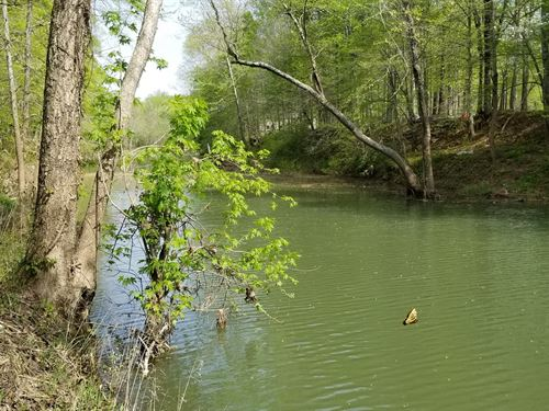 One Acre Lot Buffalo River Perry : Lobelville : Perry County : Tennessee