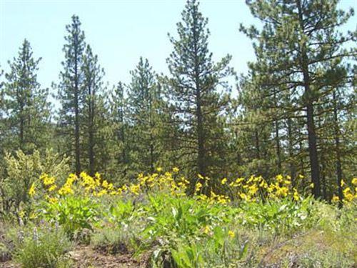 California Pines, Modoc County, Ca : Modoc : California