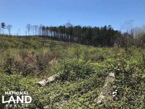 Deer Hunting / Clean Slate Cut-Over : Louisville : Winston County : Mississippi