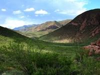 Beautiful West, Horses Ok, $195 P/M : Douglas : Cochise County : Arizona