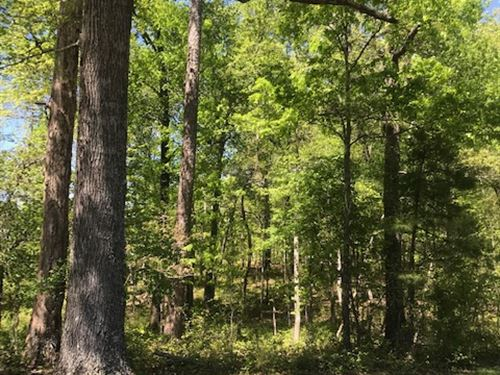 5.00+/- Acres Wooded & Unrestricted : Soddy Daisy : Hamilton County : Tennessee