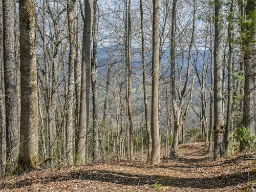 Towering Hardwoods And White Pines : Marshall : Madison County : North Carolina
