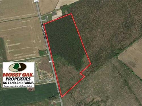 16.6 Acres of Hunting And Timber : Gates : North Carolina