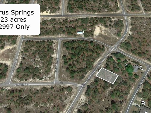 .23 Acre Cleared On A Paved Road : Citrus Springs : Marion County : Florida