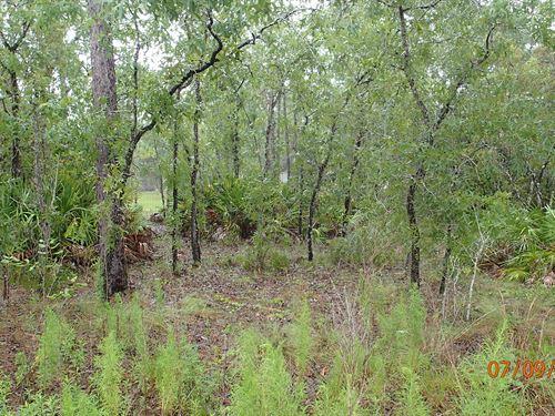 Mini Farm With Mature Trees : Dunnellon : Citrus County : Florida