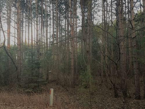 Wooded Lot Hartman Creek State Park : Waupaca : Wisconsin