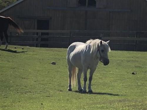 Montauk Farm Land For Sale : Montauk : New York County : New York