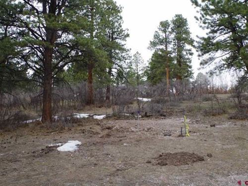 Lot, Close to National Forest : Ridgway : Ouray County : Colorado
