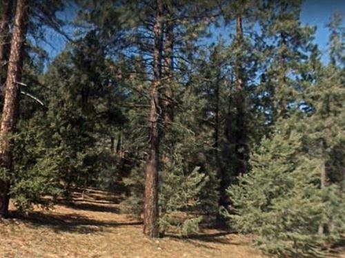 Kern County, Ca $25,000 Per Lot : Pine Mountain Club : Kern County : California