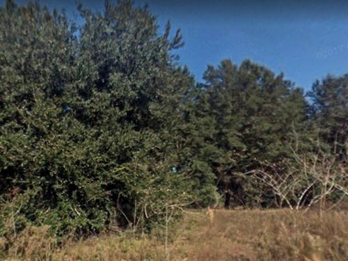 Marion County, Fl $50,000 : Belleview : Marion County : Florida