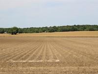 Dunnellon Farmland : Dunnellon : Marion County : Florida