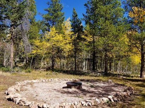 Dream Camping Lot : Red Feather Lakes : Larimer County : Colorado