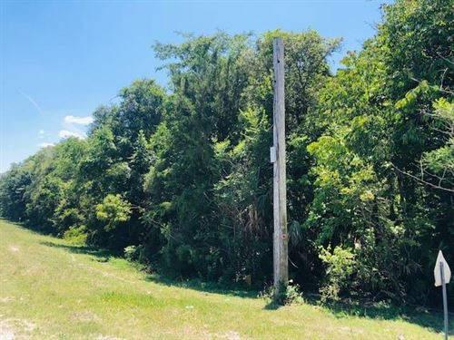 Great Lot For Your New Home 777931 : Old Town : Dixie County : Florida